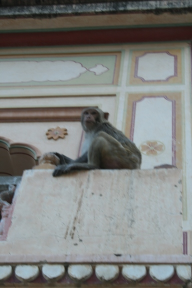 At the Monkey Temple, Jaipur