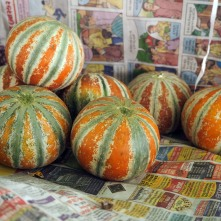Colourful pumpkins in the vegetable market, Bhuj