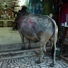 Bull goes into Varanasi shop