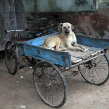 Dog on ute