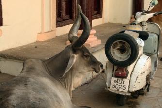 Street parking, old Ahmedabad